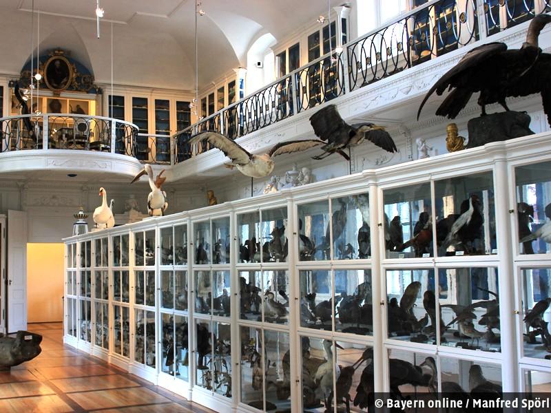 Bamberg Naturkundemuseum